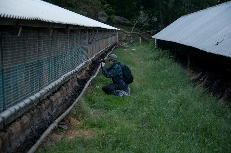 Uanmeldt inspeksjon av pelsfarm